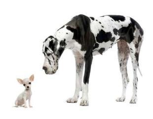 """""""חופשי"""" - קייטנה לכלבים בכפר יהושע"""